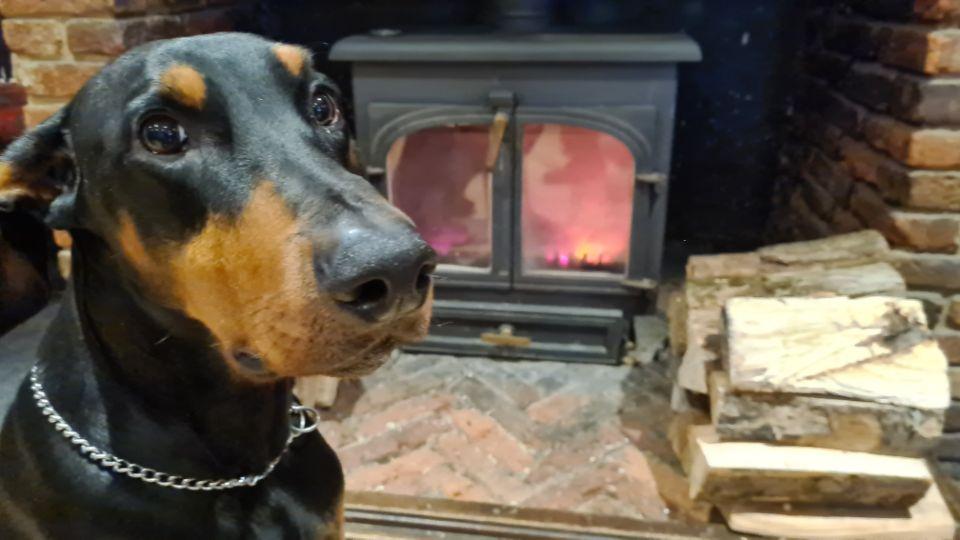 Lenny by the Log Burner