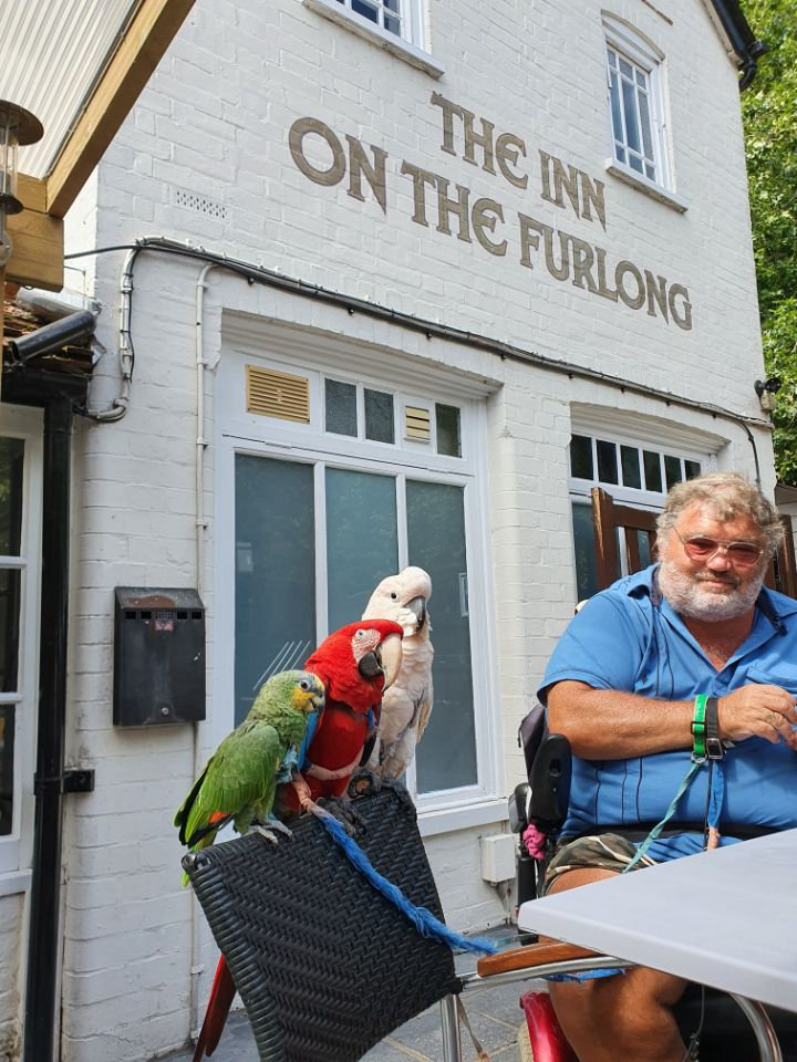 Guest with birds on leads